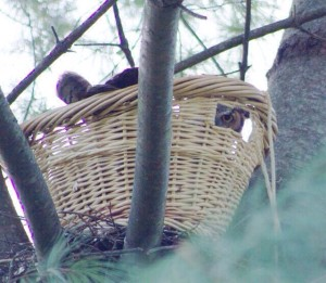 owl-in-basket