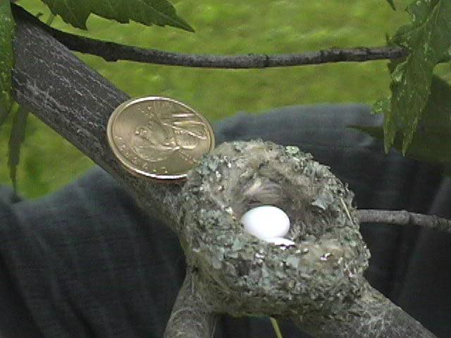 hummer-nest